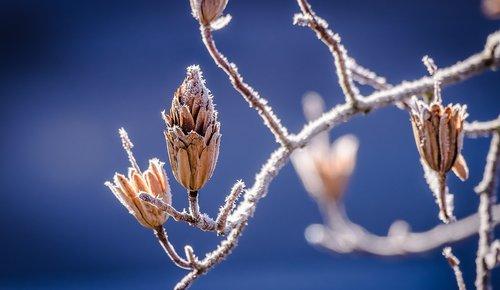Winterdepressionen kommen trotz aller Schönheit des Winters oft vor