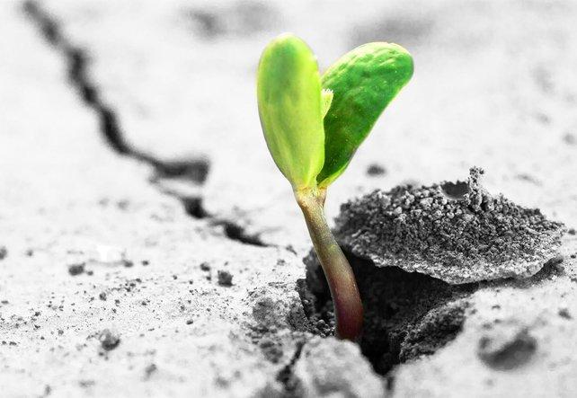Eine Pflanze durchbricht eine Straßendecke