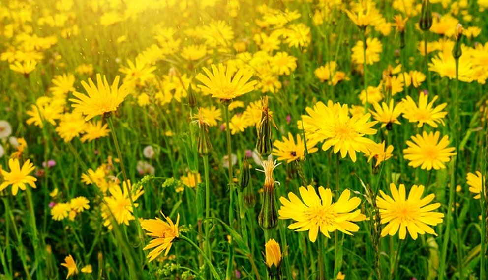 Pflanze zum Thema Naturheilkunde