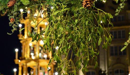 Heilpflanzen Serie: Mistel, eine sorgsame Begleiterin durch die Winterzeit